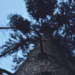 Wald, Tageslicht Nikon-Kamera  Fotografie  September 2016