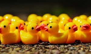 New Year Resolutions - Getting Your Ducks in Order