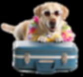 slider-cachorro-taxidog.png