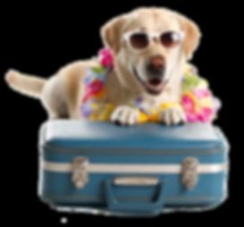 slider-cachorro-taxidog_edited.png