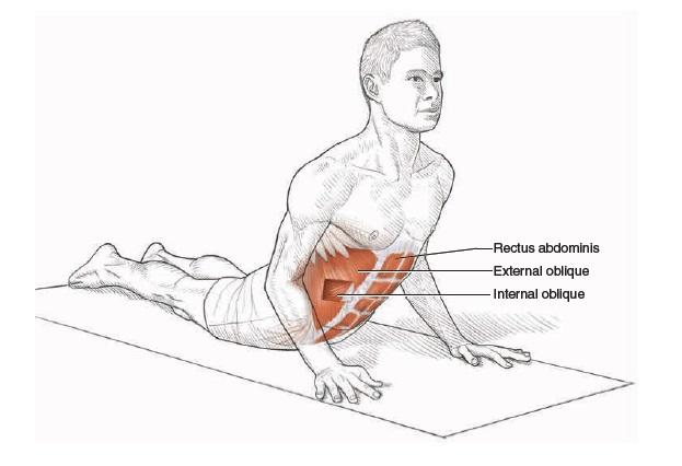 Stretching & Flexibility   Gus White Fitness   Mexico CityInternal Oblique Stretch