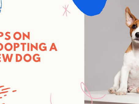 Tips to prepare when adopting a dog