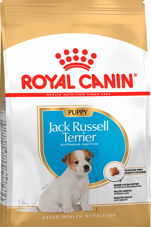 BREED JACK RUSSEL PUPPY