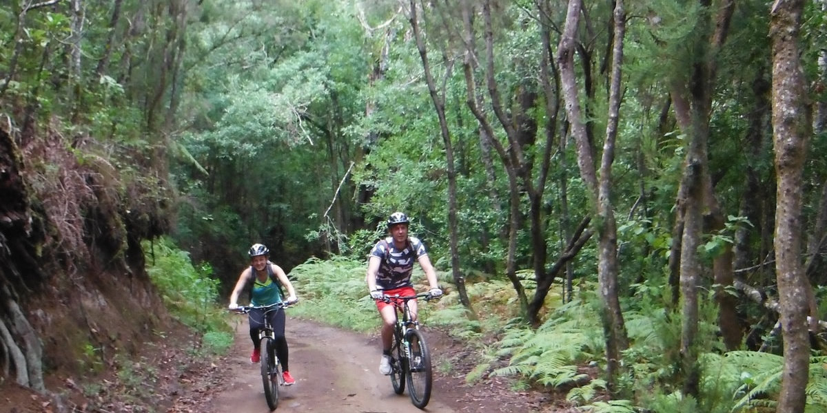 The EVER green forest – El Cedro