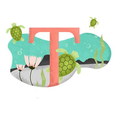 T for Turtle