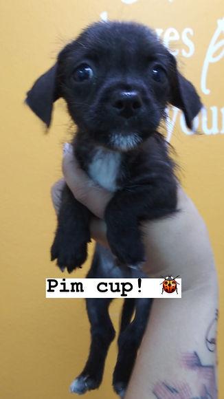 pim cup.JPG