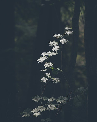 #nature #vancouverphotographer.jpg