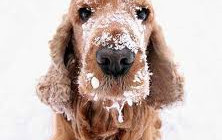 Hipotermija: Kako pomoci vasem psu na niskim temperaturama