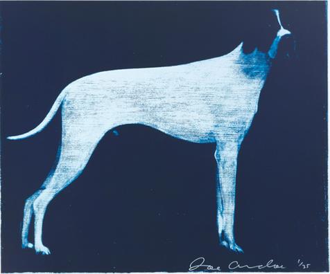Large Dog (Midnight Blue)