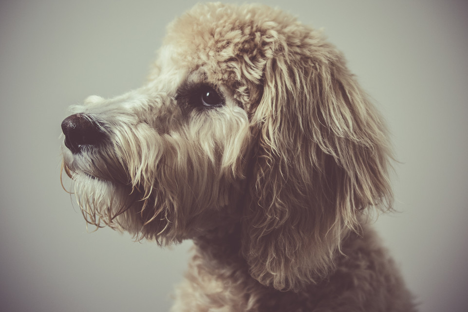 Dogs (6 of 26).jpg