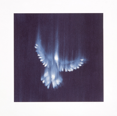 Falling Birds, 1