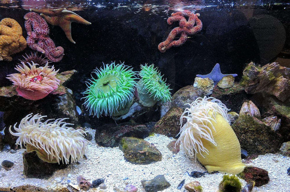 Colorful anemones on a tropical coral reef