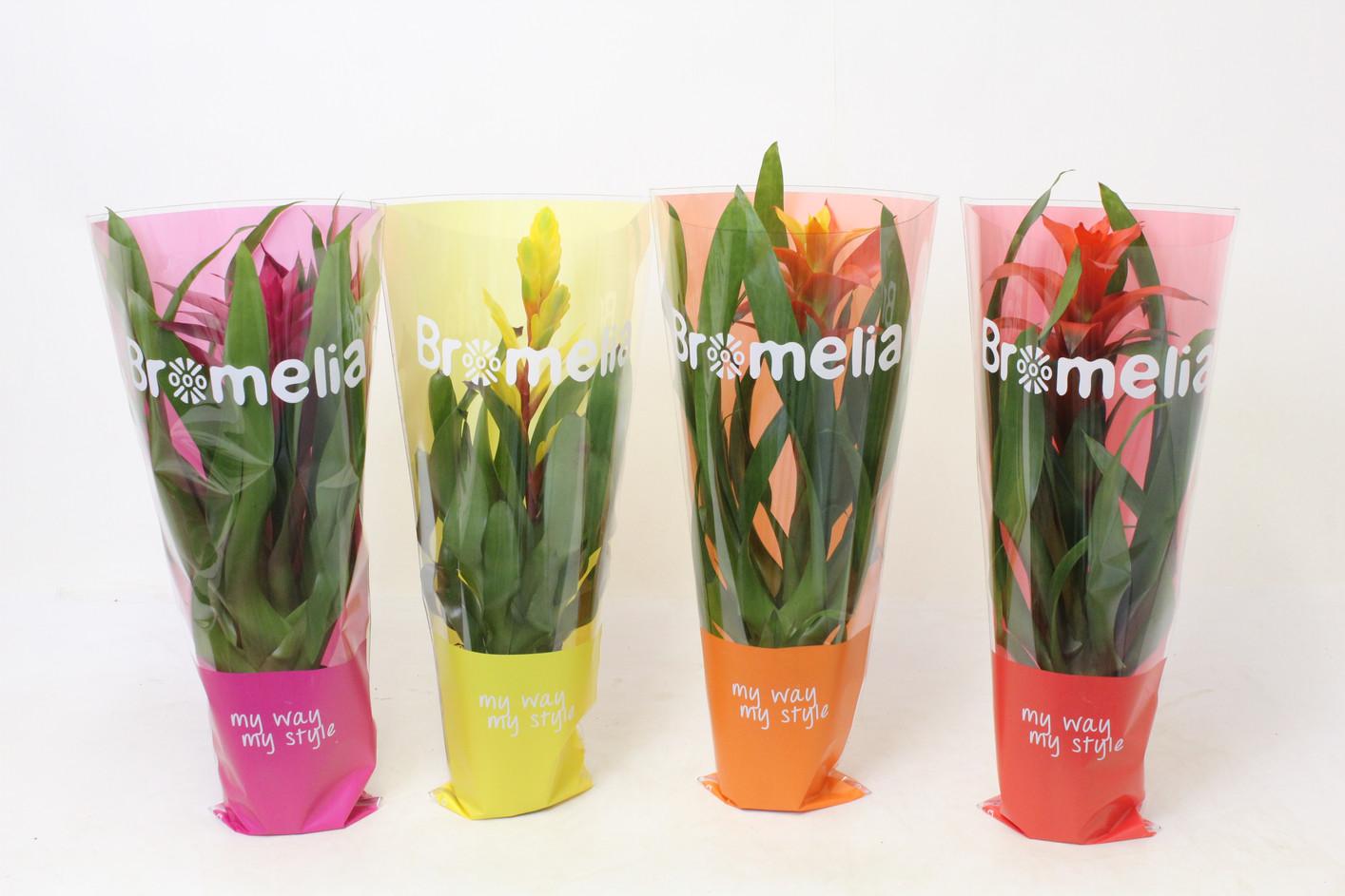 Bromelia mix TST Hoes