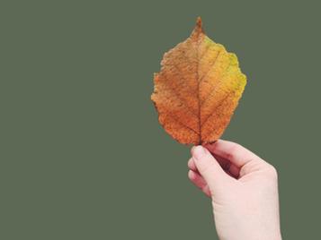 Ep. 6.1 Working Through Seasons of Change