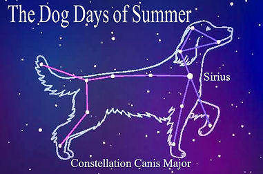 LOGO - The Dog Days of Summer.JPG