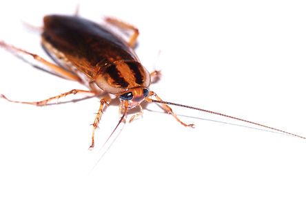 cockroach solution in edmond ok