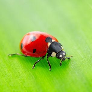 lady bugs treatment in edmond ok