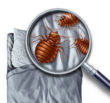 edmond bed bugs solution