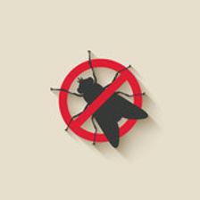 flies control