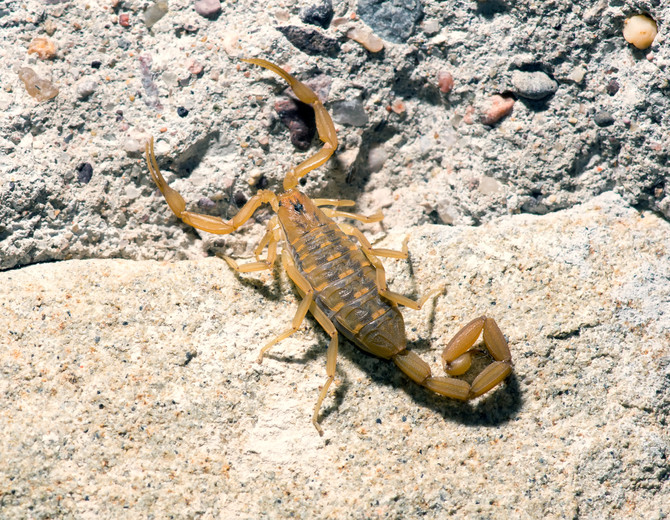 Stop Scorpions From Moving In