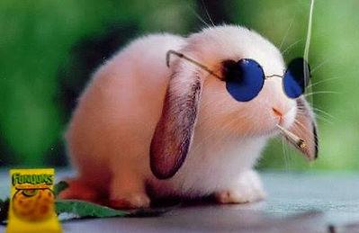 Skitz TV bunny.jpg