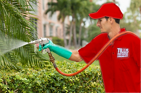 Lawn and Shrub Service for Pest Control
