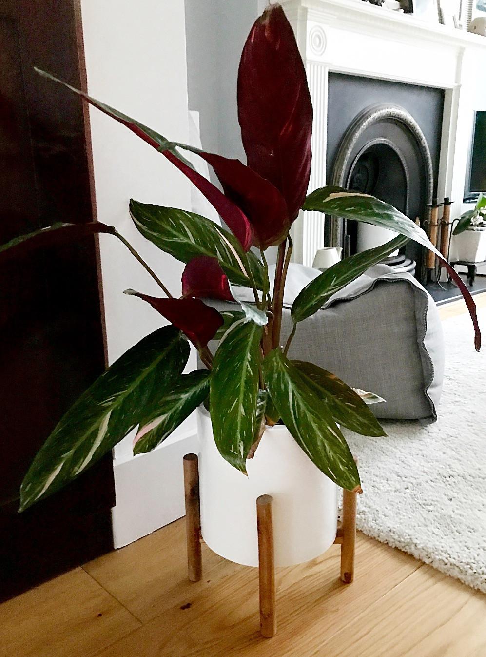 plant planter calm declutter organise