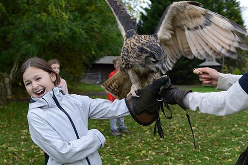owl bird of prey falconry experience