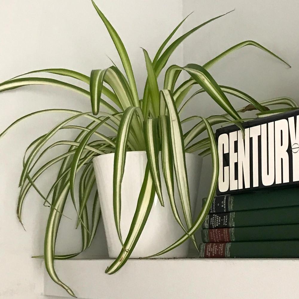 Plant Air quality Breathe House Plants