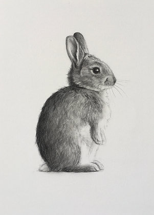 Standing Rabbit Original Pencil Sketch
