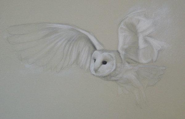 'Flutter' Limited Edition Print
