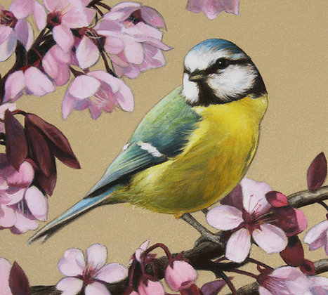 'Blue Tit and Cherry Blossom' Print