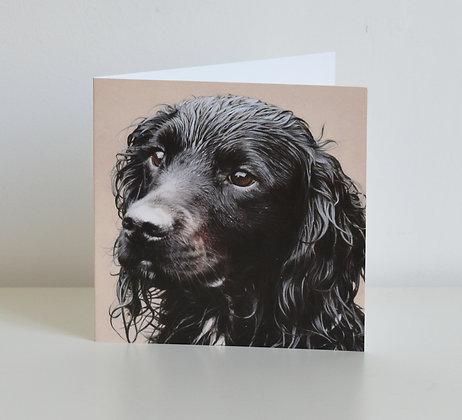'Gibbs' Cocker Spaniel Greeting Card