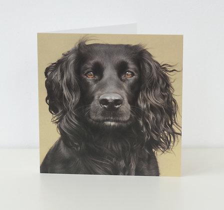 'Toots' Cocker Spaniel Greeting Card