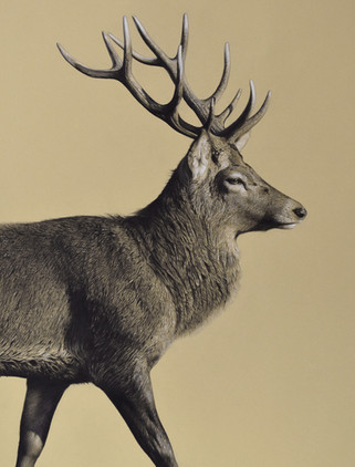 Striding Stag
