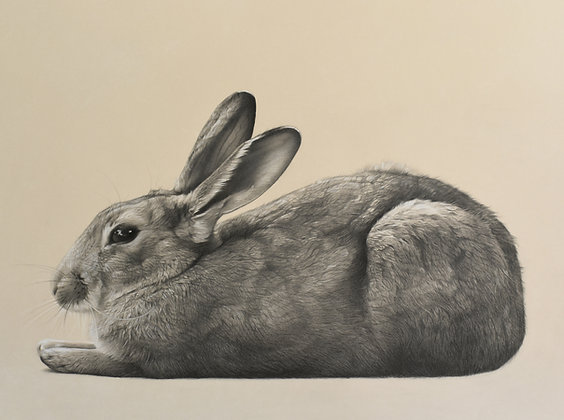 Resting Rabbit - Original Pencil Drawing