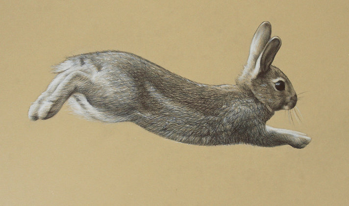 'Run Rabbit' Print