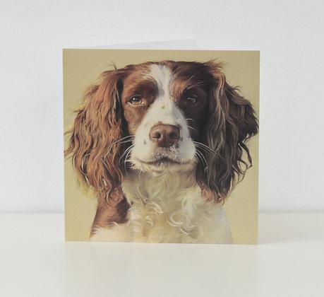 'Daisy' Springer Spaniel Greeting Card