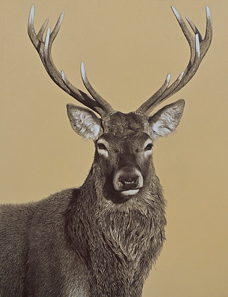 'Portrait of a Stag' Limited Edition Print in 2 Sizes