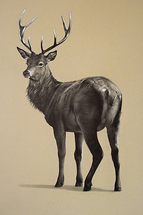 'Red Stag' Print in 2 Sizes