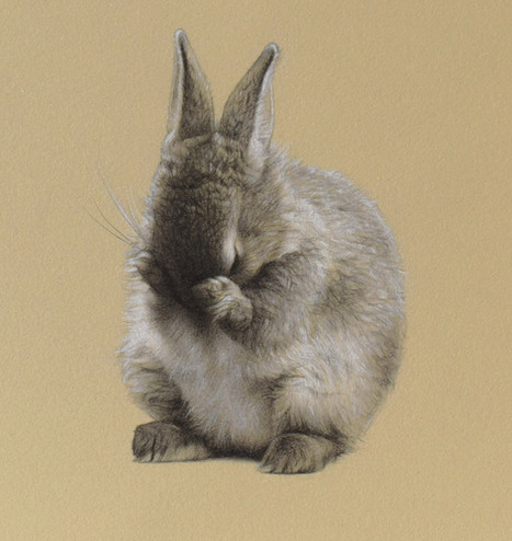 Shame Bunny