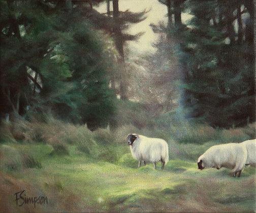 'Sheepy One' Print