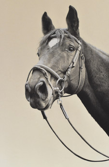 Black and white coloured pencil and graphite on toned paper (18 x 27 inches)