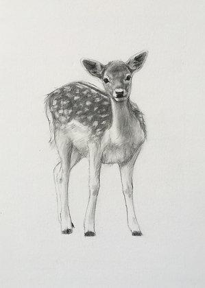 Fawn Original Pencil Sketch