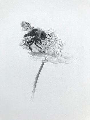 Bumblebee on Blossom Original Pencil Sketch