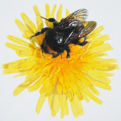 Dandelion Bee