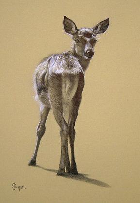 'Little Deer' Limited Edition Print