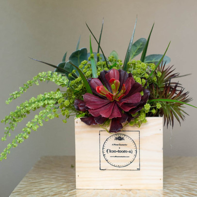 The Koo-toore-a comes arranged in its signature container with a lovely mix of life like greens.