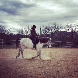 Concentres 😅#ranchelbronco #horses #wor