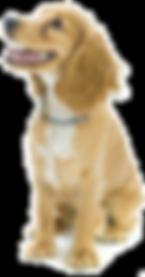 Canberra Dogs Daycare